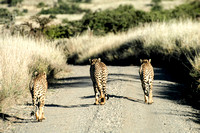 The three brothers of Lewa Conservancy