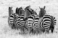 Band of stripes
